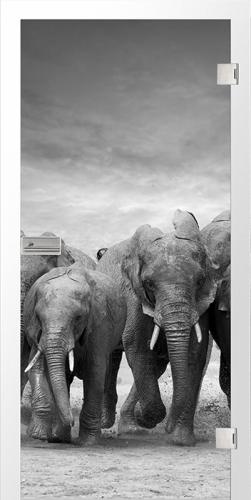 Ganzglastür Elefanten fotoprint/fusion
